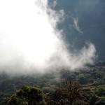 cloud-forest