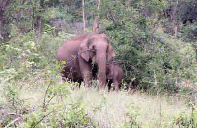 elephant seen on wildlife safari on western ghats